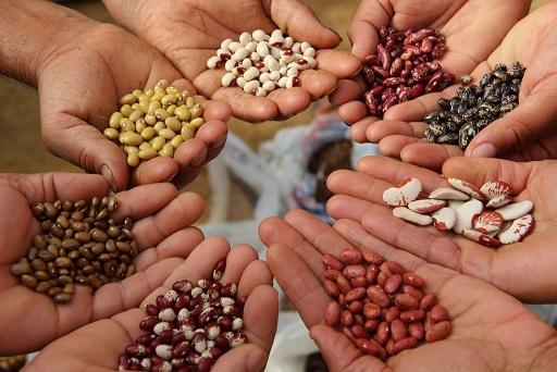 La semilla perdida: alimentos y agricultura en la cumbre de la OMC