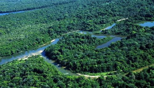 El futuro de la Amazonia